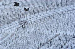 1个没有葡萄园冬天 库存图片