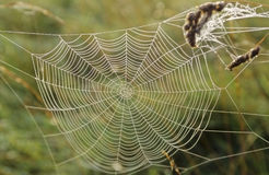 1个没有蜘蛛网 图库摄影
