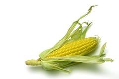 1个玉米棒玉米 免版税库存照片