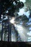 1个神光芒 库存照片