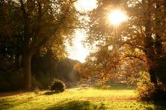 1个秋天森林 库存图片