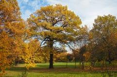 1个秋天结构树 免版税库存图片