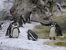 1个组企鹅 库存图片
