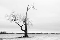 1个结构树 库存照片