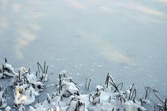 1个背景冬天 免版税库存图片