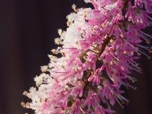 1个花冬天 图库摄影