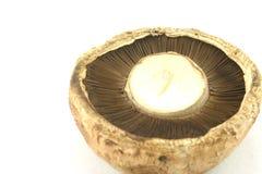1个蘑菇 免版税库存图片