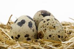 1个蛋鹌鹑 免版税库存照片