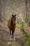 1匹马 库存照片