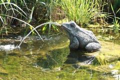 1只喷泉青蛙 库存照片