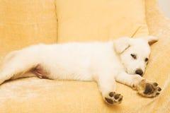 1只小狗 库存图片