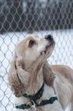 1只猎犬 库存图片