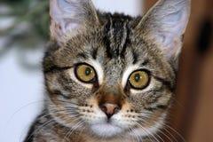 1只猫 免版税图库摄影