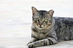 1只猫 免版税库存照片
