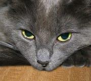 1只猫 库存图片
