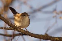 1只鸟 免版税库存照片