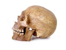 1块包括的路径头骨 库存图片