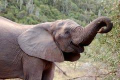 1头大象 免版税库存照片