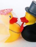 1婚姻的鸭子 库存照片