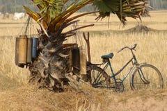 1座油棕榈树 库存照片