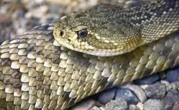 1张地毯绘了蛇蝎 免版税库存照片