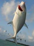 1条抓住鱼 库存照片