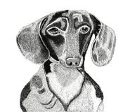 1条狗 免版税库存图片