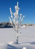1根大结霜的枝杈 库存照片