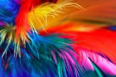 1根抽象羽毛 免版税库存照片