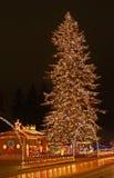 1棵大圣诞树 库存照片