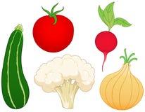 1棵集合蔬菜 向量例证