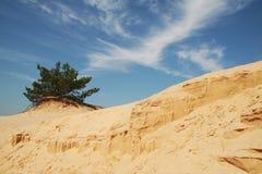 1片沙漠绿洲 免版税图库摄影