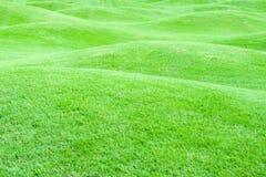 1绿色牧场地 免版税库存图片