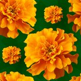 1背景用花装饰的黄色 免版税库存图片