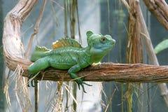 1蛇怪绿色 免版税库存照片