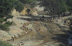 1辆骆驼有蓬卡车 库存图片