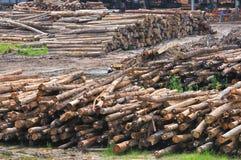 1锯木厂系列木材 库存照片