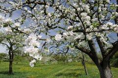 1 äpple baden blommor Arkivfoto