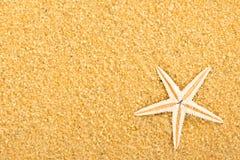 1 αστέρι θάλασσας Στοκ εικόνα με δικαίωμα ελεύθερης χρήσης