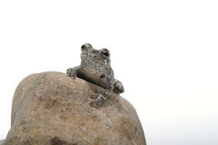 1 βάτραχος Στοκ εικόνες με δικαίωμα ελεύθερης χρήσης