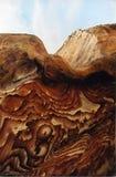 1 βράχος PETRA Στοκ Εικόνα