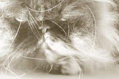 1 γάτα που χαλούν Στοκ εικόνα με δικαίωμα ελεύθερης χρήσης