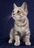 1 γατάκι Στοκ Εικόνες