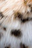1 γούνα Στοκ εικόνα με δικαίωμα ελεύθερης χρήσης