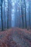 1 δάσος Στοκ Φωτογραφίες