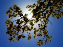 1 δέντρο Στοκ Εικόνες