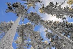 1 κανένα χιονώδες δέντρο Στοκ εικόνες με δικαίωμα ελεύθερης χρήσης