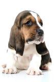 1 κουτάβι σκυλιών Στοκ Εικόνες