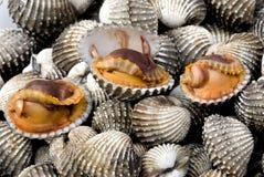1 κοχύλι θάλασσας τροφίμω& Στοκ Εικόνα