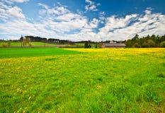 1 λουλούδι πεδίων κίτρινο Στοκ φωτογραφία με δικαίωμα ελεύθερης χρήσης